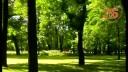 Маленькие детали большого города | Парки и сады. Сад у Михайловского дворца