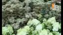 Инструктаж | Как удержаться в каноэ и байдарке. Какие цветы в моде. О древнем японском стиле работы с оружием