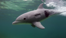 "<a href=""http://www.hdlife.ru/our-projects/16110"">Дельфины. Шпион в стае</a><small>Познавательная программа</small>"