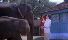 "<a href=""http://indiatv.ru/films/30471"">Слон мой</a>"