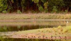 Индия – Национальный Парк Канха