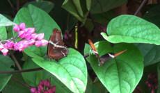 Тропический лес: Южная Америка