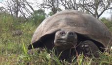 Уникальные Галапагосские Острова: Южная Америка