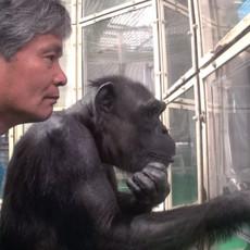 Что делает нас людьми. Учимся у шимпанзе