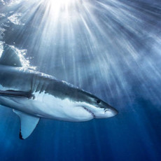Вся правда об акулах