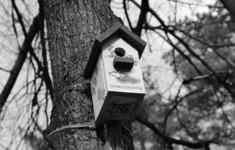 Телеканал «365 дней ТВ» принял участие во Всероссийском экологическом проекте «Поможем птицам вместе!»