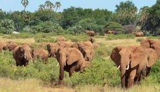 Великие миграции в природе