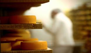 Вкус сыра