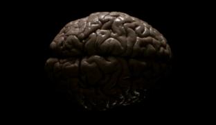Тайны человеческого мозга