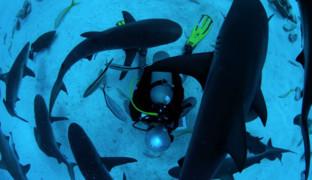 Дайвинг с акулами: полное руководство