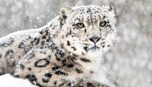 Выжить в снегу