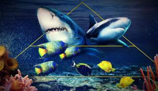 Акулы. Руководство к действию