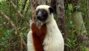 Тайны Мадагаскара