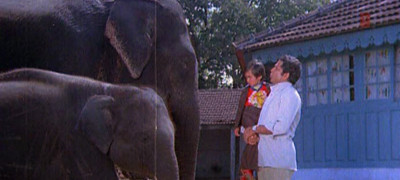 Слон мой