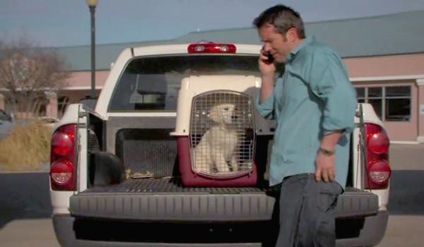 Приключения Бейли: Потерянный щенок